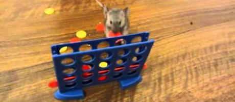 These Trained Mice Are More Clever Than Your Dog