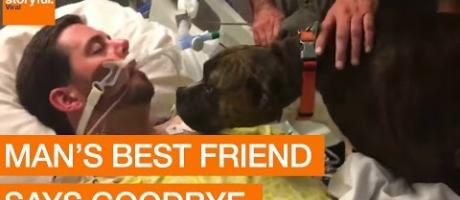 Dog's Final Goodbye at Owner's Hospital Bedside